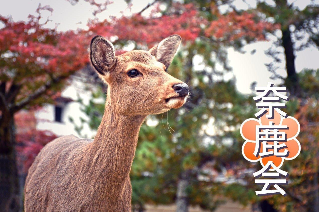 Yakuza Deer! | The Street Gangs of Nara and Miyajima